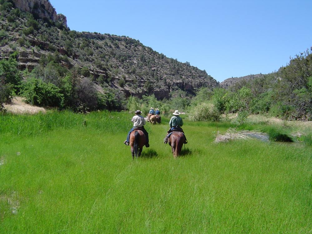A sedge meadow on the Verde River in Arizona—a true desert oasis: a source of stability and habitat in a land of extremes.