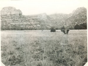 Here's another transect, also near Sedona, while it is being grazed in 1958.