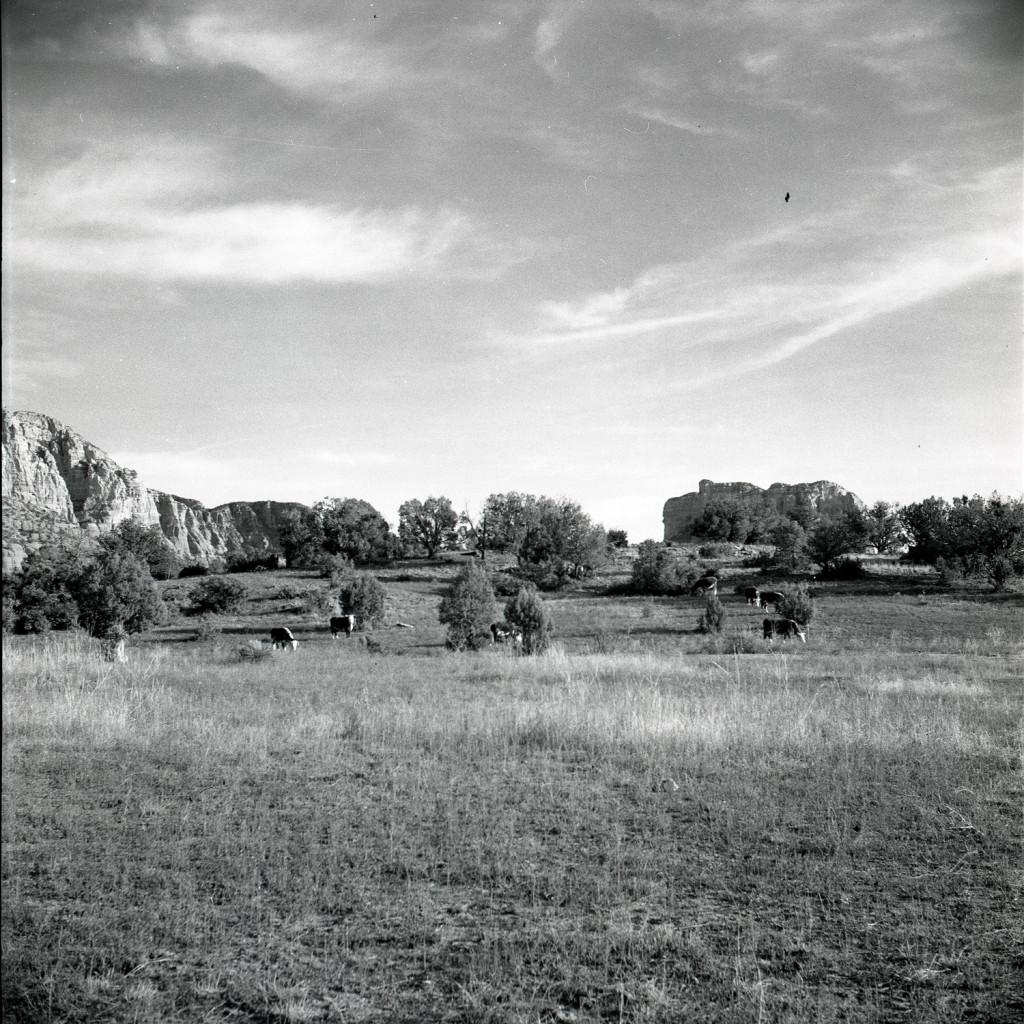 1.Little Horse Park 1957