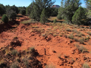 Here's another study plot on an area of rangeland near Sedona, AZ, protected since the mid-1980s.