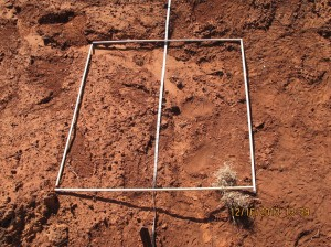 One interesting practice in this monitoring technique is to select a 3' by 3' area near stake #1 and map the plants there. Start mapping!