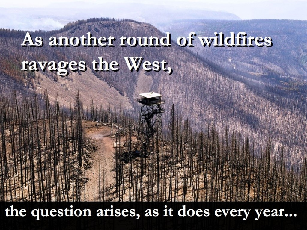 CONSERVATIVE ENVIRONMENTALISM – PARTNERING WITH ANIMALS to Heal Wildfire Damage