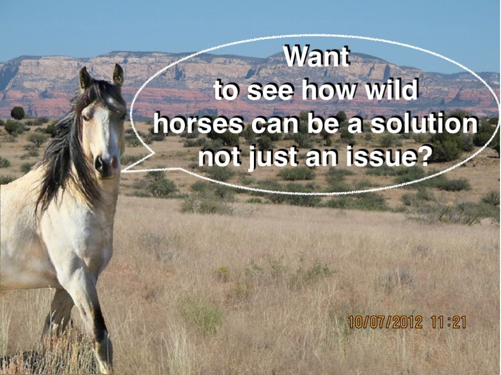 WILD HORSES AS A SOLUTION NOT AN ISSUE